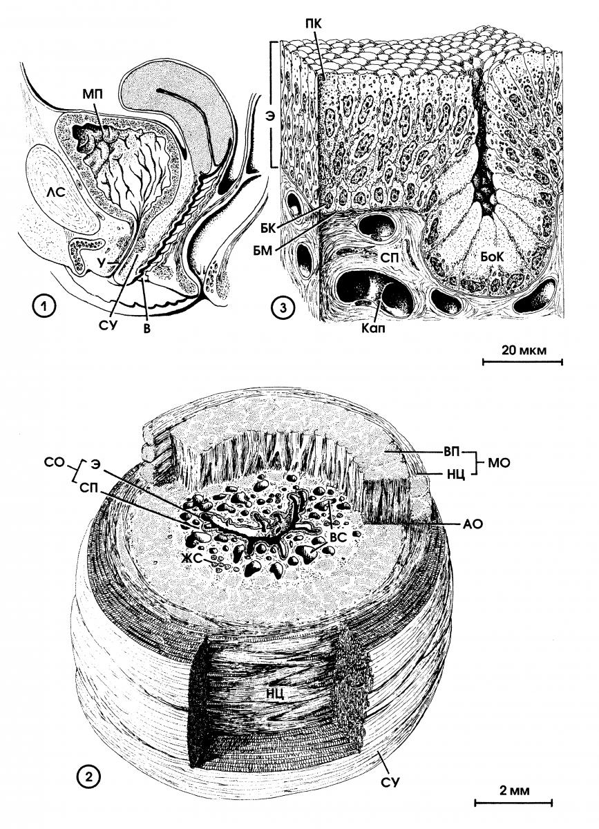 Урология предстательная железа анализы