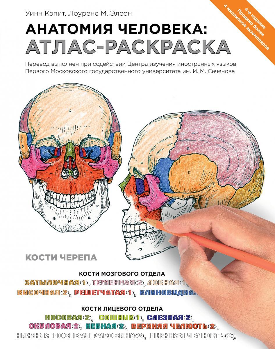 Скачать бесплатно книгу анатомия человека
