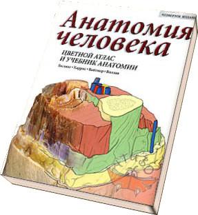 Учебники По Анатомии Человека Для Педвузов