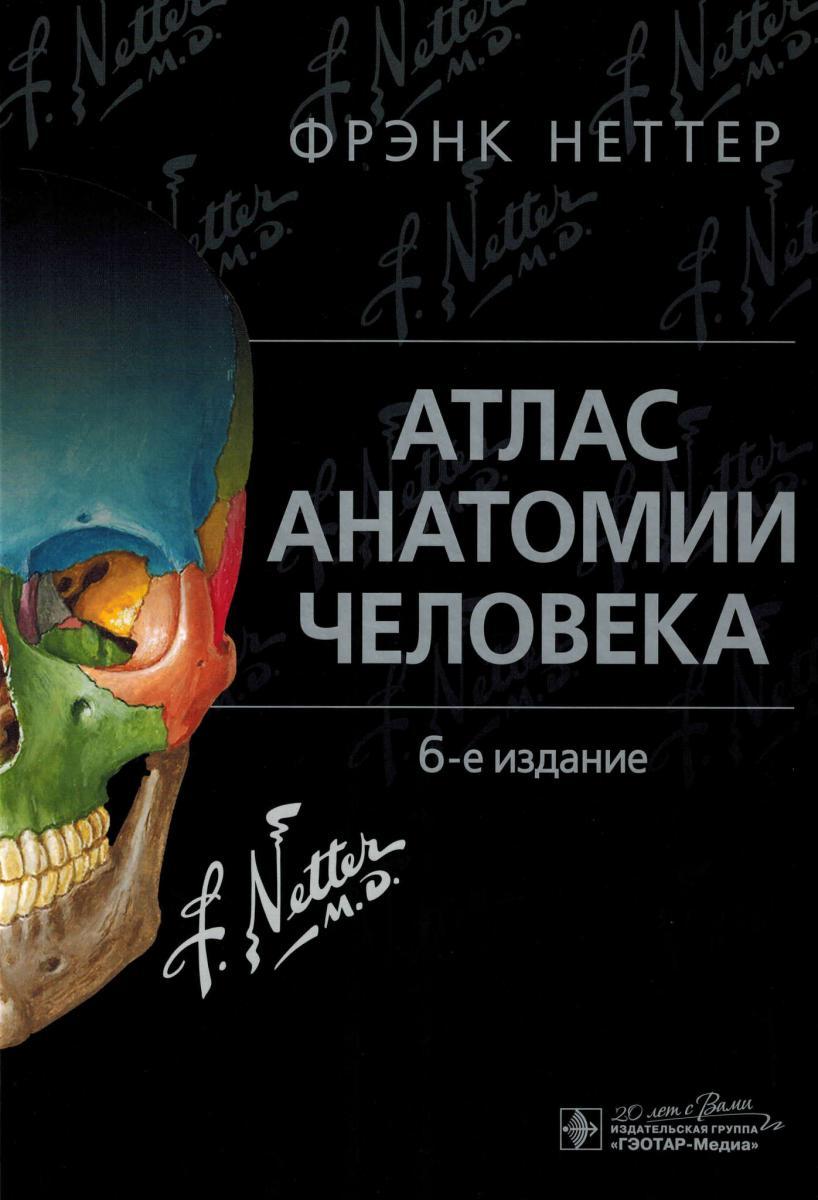 АТЛАС АНАТОМИИ ЧЕЛОВЕКА ФРЭНК НЕТТЕР СКАЧАТЬ БЕСПЛАТНО