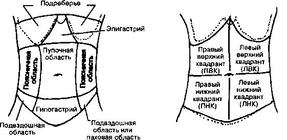 Зоны брюшной полости