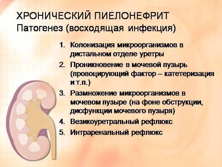 Пиелонефрит Причины Симптомы Диета. Правила питания и составления меню при пиелонефрите