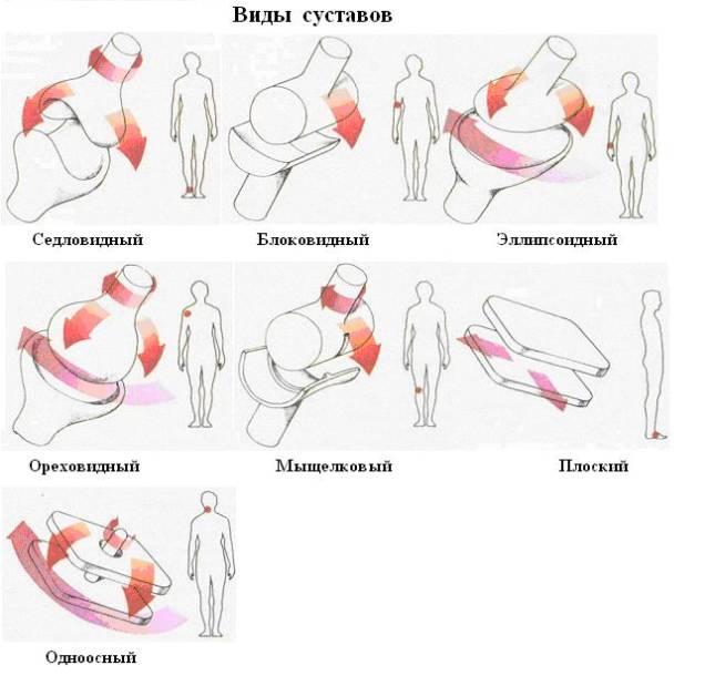 Изображение - Суставы и их типы vidisustavov